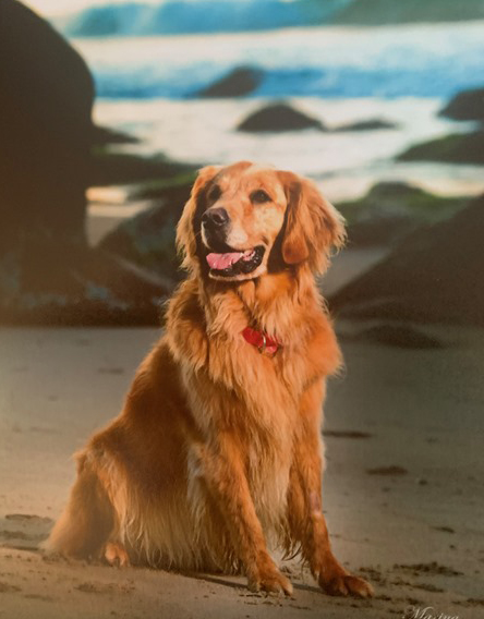 Pet Therapy Volunteer Rory Holt